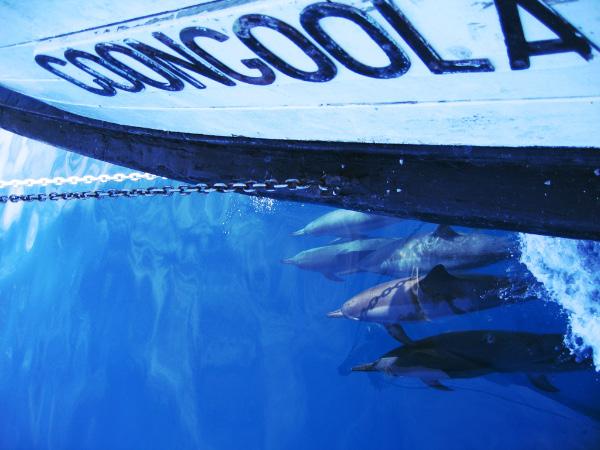 dolphinspacingcoongoola